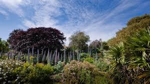 Ventnor Botanic Gardens Through The Garden Gate Ventnor Botanic Garden