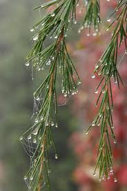 free images water nature branch drop dew fog mist rain