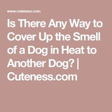 How To Comfort A Cat In Heat The 25 Best Dog In Heat Ideas On Pinterest Dog Products Heated