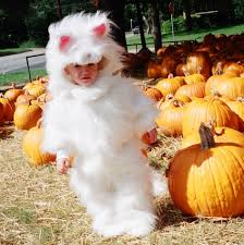 fluffy halloween costumes toddler cat costume fluffy white cat halloween costume