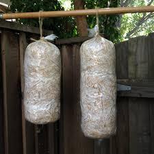 growing mushrooms in bags style guru fashion glitz glamour