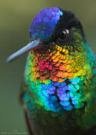 using georgia native plants hummingbird favorites in my garden the 15 most spectacular hummingbirds ruby throated hummingbird