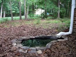 backyard nature front yard pond in progress