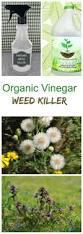 programs natural resources weeds and vinegar weed killer killing weeds the organic way