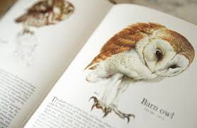 Barn Owl Holidays Owl House Holiday Cottages In Cornwall
