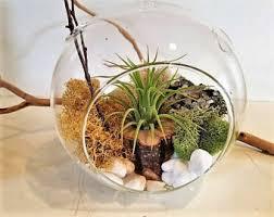 diy air plant terrarium kit mothers day gift air plant terrarium