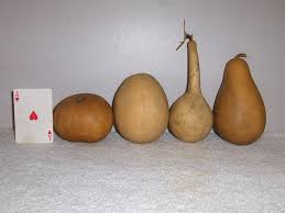 the 25 best gourd types ideas on