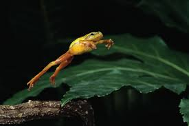 demise of dinosaurs opened the doors to the age of tree frogs