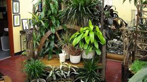 Best Fragrant Indoor Plants - top 10 tropical house plants any one can grow the self
