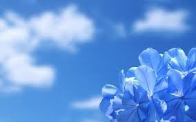 Wedding Flowers Blue Blue Flower Hd Wallpapers