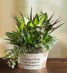 sympathy plants sympathy plants sympathy plant delivery 1800flowers