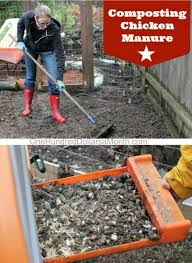 composting chicken manure one hundred dollars a month