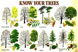 tree types list of different types of trees 8473619