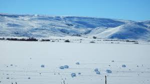 Photos Of Snow Snow Rollers U201cspontaneous Snowballs U201d At Silver Creek Preserve