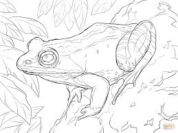 wood frog coloring page free printable coloring pages