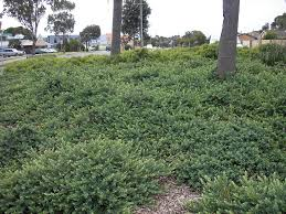 australian native plants guide gardening with angus bringing you the best in australian plants