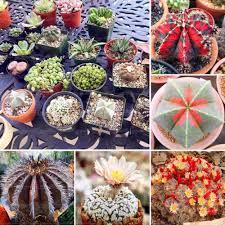 online buy wholesale indoor cactus garden from china indoor cactus