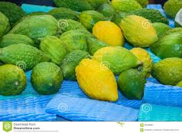 etrog for sale the citron fruit etrog laid out for sale stock image image