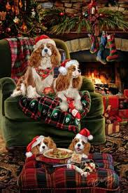 462 best cavalier king charles spaniel images on