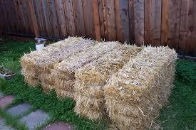 straw bale gardens 101 homegrown