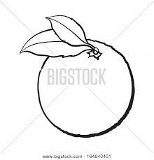 realistic colorful hand drawn ripe vector u0026 photo bigstock