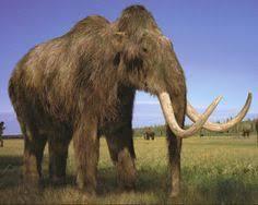 woolly mammoths u0027 taste flowers