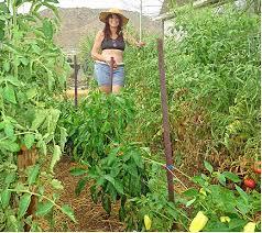 backyard vegetable gardening u2013 backyard gardening