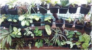 Vertical Garden Trellis - horticulture landscaping vertical gardening