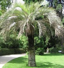 xeriscape texas native plants for drought tolerant resistant design