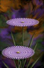 Nice Flower Picture - nice shape one of its kind shapes patterns pinterest
