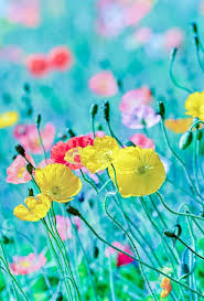Spring Colors 78 Best Spring Primavera Images On Pinterest Nature Spring And