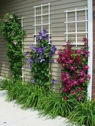 how to plant a flower garden in your backyard clematis trellis
