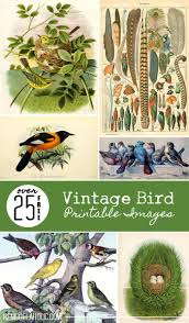 290 best birds images on pinterest animals humming birds and