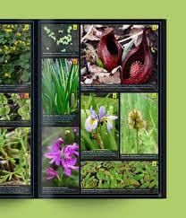 native prairie plants illinois illinois plant booklet u2014 danielle ruffatto alberts