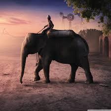 apple wallpaper elephant elephant man by parimal nakrani paradise of creativity 4k hd