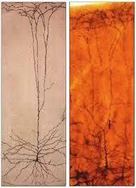 images for u003e neuron tattoo tats pinterest tattoo and tatting