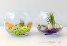 make these colorful terrariums to brighten up your day