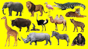 learning wild animals names and sounds for kids in english funny