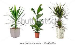 Indoor Plant Vases Indoor Plants Stock Images Royalty Free Images U0026 Vectors