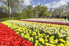 Best Public Gardens by The Best Places To See Tulips In The Netherlands
