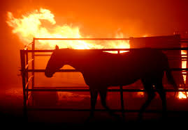 California Flag Horse Dozens Of Horses Die As Southern California Wildfires Take U0027tragic