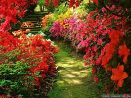flower garden wallpaper beautiful red rose garden u2013 best wallpaper