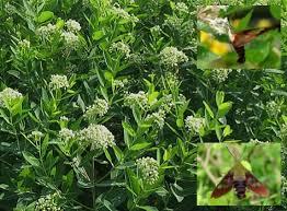 Gardening Zones Canada - full plant list u2013 shopping