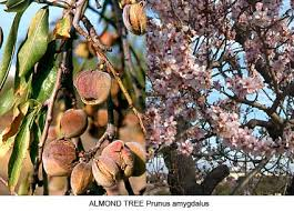 plants u0026 flowers of greek myth 1