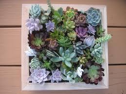 download succulent wall art himalayantrexplorers com