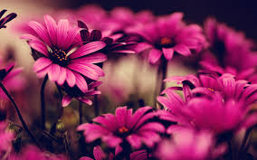 Pictures Of Flowers by 40 Beautiful Flower Wallpapers Free To Download Pinterest