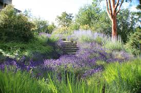 russian native plants i would follow this path anywhere spanish lavender russian