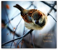 an eye on the sparrow susan deborah schiller a cry for justice