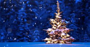 christmas tree christmas tree gif find on giphy