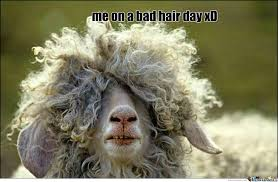 Curly Hair Meme - manly curls